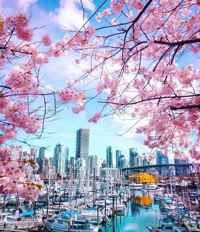 Helloooo sunshine!! Spring is officially here and we are not mad about it! It's hard to beat a sunny walk on the Seawall with views like this! I mean, who doesn't love a little pop of color throughout the City 😍