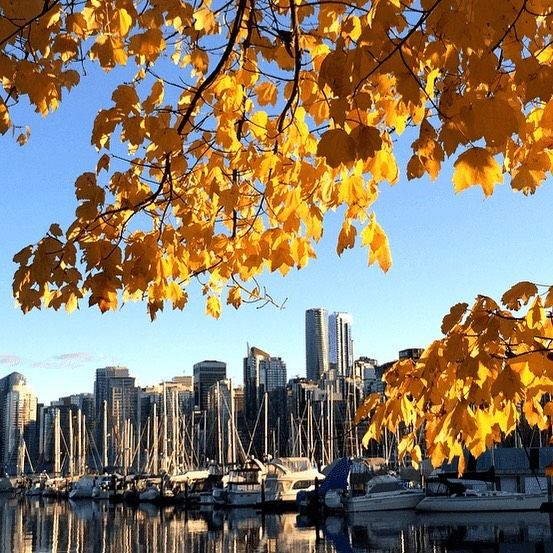 Fall is finally here and we are loving the ever changing colors in the mix.. I mean what's not to love?! Hellooo sweater weather! Time to grab your pumpkin spiced latte, super puff and hit the seawall for a beauty stroll! 🍁